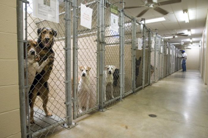 State launches investigation into 17 animal shelters in Michigan for alleged violations