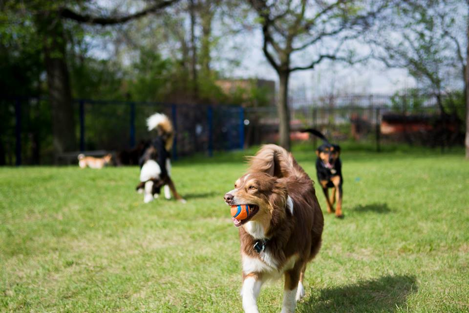 Detroit Dog Park by Anthony Barchock of Francis' Photos.