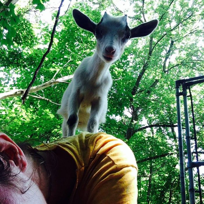 Detroit officers seize goats, chickens from sobbing homeowner over 'farm' ordinance