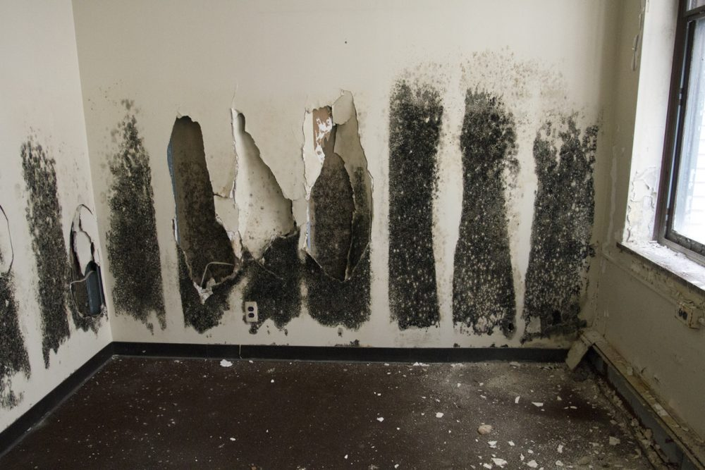 Over the past year, a lot of black mold has collected along the walls.