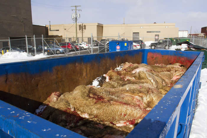 Halal slaughterhouse at Eastern Market won't stop dumping lamb remains in dumpsters