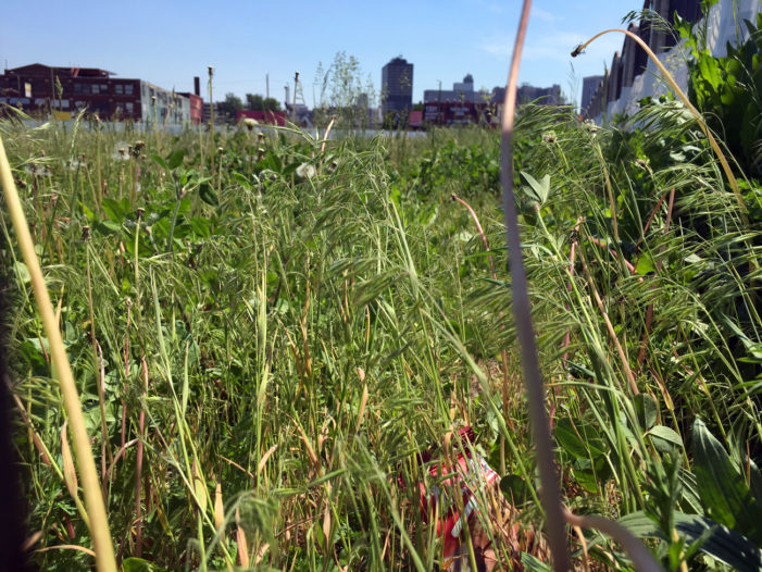 New Willie Horton Field of Dreams is nightmare for Corktown residents