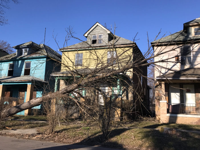 50 photos showing the dangers of Detroit's pervasive dead trees