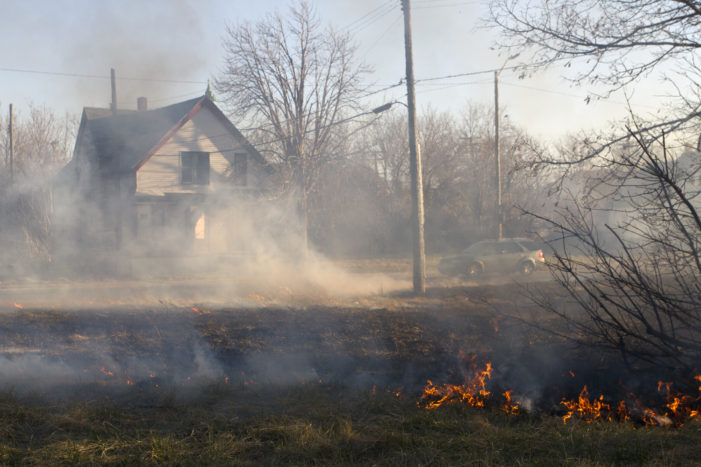Up close: DTE, rotting trees to blame for many of Detroit's wind-swept fires